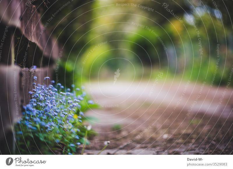 Blumen am Wegesrand - Vergissmeinnicht Vergißmeinnicht Wege & Pfade Starke Tiefenschärfe wunderschön Ziel Zaun wachsen blau Natur Straße Sommer Frühling Tag