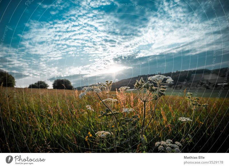 Grüne Wiese im Abendlicht Tag Nahaufnahme Froschperspektive Textfreiraum oben Rasen sommerlich Außenaufnahme Leichtigkeit Leben Erholung grün Wärme