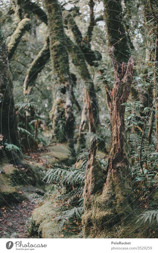 #As# Waldweg Waldboden Waldlichtung Waldrand Waldspaziergang Waldstimmung Baum Bäume grün Natur Außenaufnahme Farbfoto Landschaft Baumstamm Umwelt Pflanze