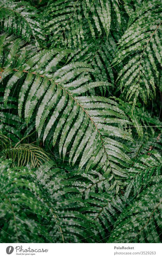 #As# Faaarn! Farn Farnblatt Farne farnwuchs Farnblätter Farnstengel farntrieb Farnzweig Natur grün Neuseeland