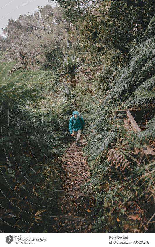 #AS# Green walk Reisefotografie mächtig Zukunft offen bewachsen Dichtung Naturwunder erhaben oben Naturliebe Naturphänomene Farnblatt ausstrecken Naturerlebnis
