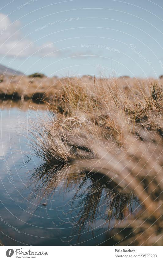 #As# Nah am Wasser Wasseroberfläche Neuseeland Neuseeland Landschaft Gras Wiese Spiegelung Schönes Wetter Außenaufnahme Natur Farbfoto Tag Menschenleer