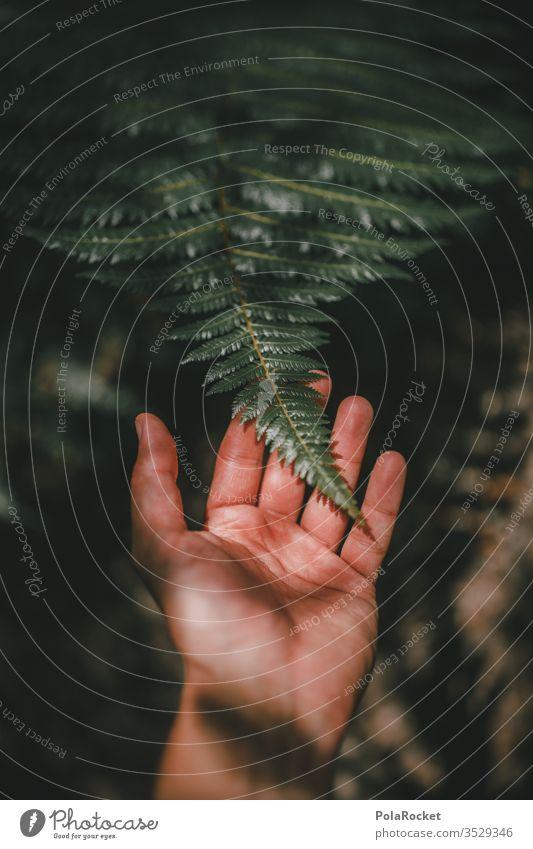 #AS# FARN! Farn Farnblatt Farne farnwuchs Farnblätter Farnzweig Farnstengel farntrieb Natur Pflanze grün Hand Naturerlebnis fühlen tasten tuchfühlung Neuseeland