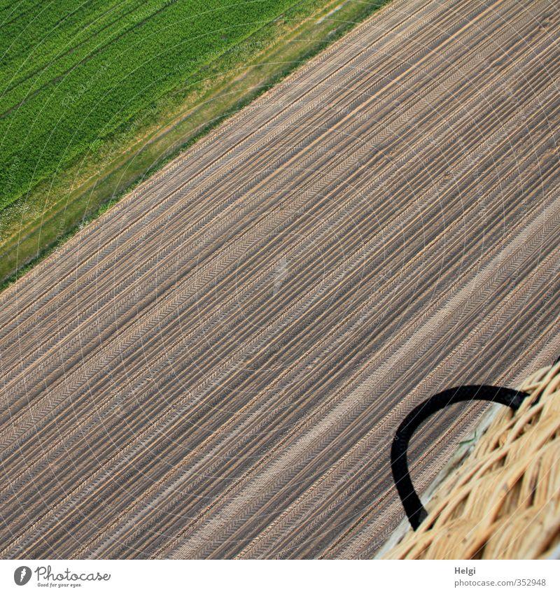 Richtung passt... Natur grün Pflanze Landschaft ruhig Freude schwarz Umwelt Wiese Gras Frühling Freiheit natürlich außergewöhnlich braun Feld