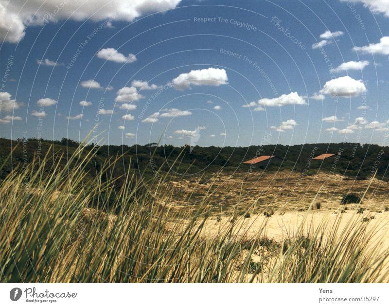 Blick von der Düne Wolken Gras Haus Wald Stranddüne Himmel Sand