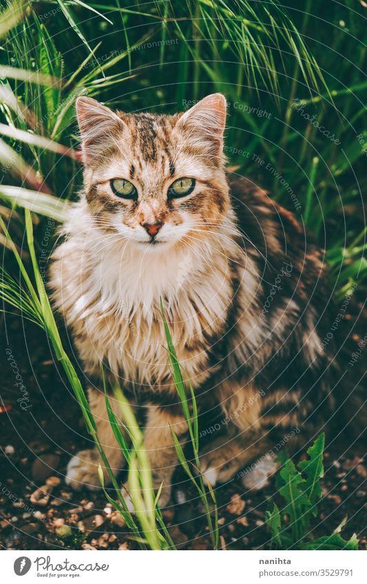 Erstaunliche und schöne Katze im Freien streunende Katze Alleenkatze Haustier Pflege Tier Säugetier frei Natur natürlich Auge Gesicht züchten allgemein Europäer