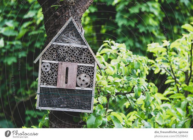 Bienenhotel im Garten Wespe Hummel Insekt Sommer Tier Blume fliegen Natur Flügel Unterkunft Baum Idylle Außenaufnahme grün Schwache Tiefenschärfe Haus