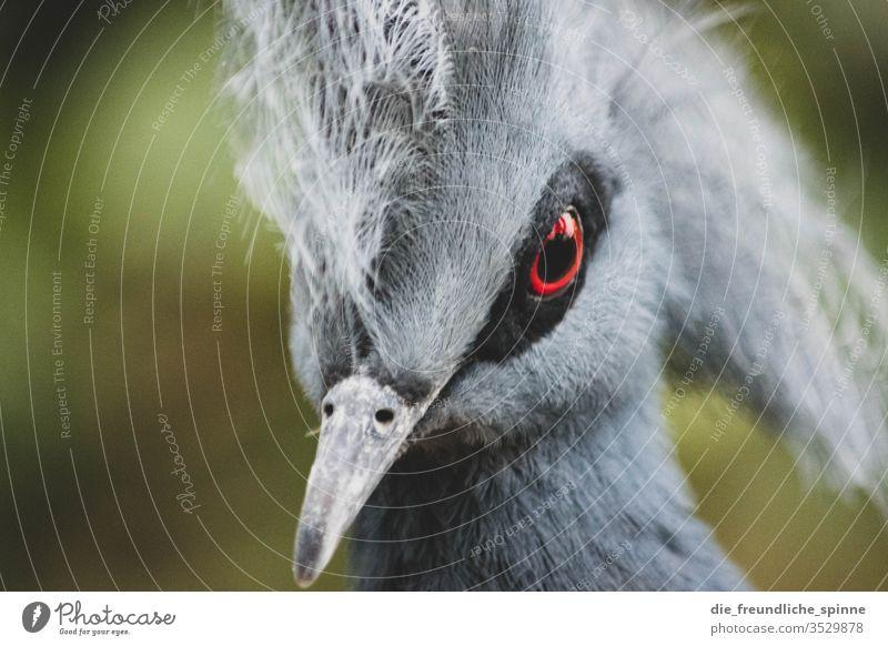Schau mir in die Augen, Kleines. niedlich Vogel Tier Außenaufnahme Farbfoto Wildtier Natur Umwelt Menschenleer Tierporträt klein Schwache Tiefenschärfe kuschlig