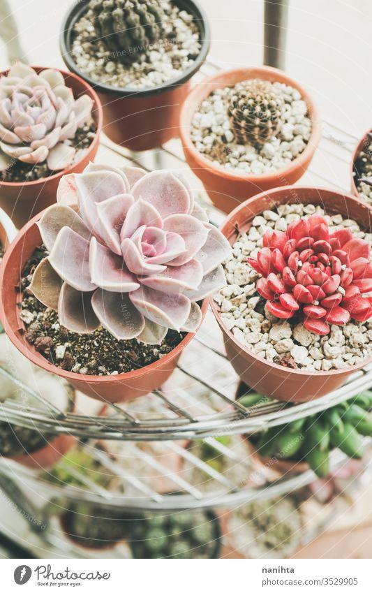 Kleiner Garten mit gemischten Sukkulentenpflanzen Pflanzen Gartenarbeit heimwärts Dekor exotisch Kaktus Fettpflanzen schön Exotische Pflanzen Blätter Topf