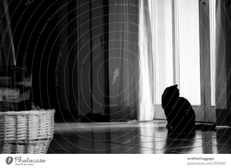 dreams and lies. Tier Haustier Katze 1 Vorhang Gardine Korb beobachten Blick sitzen träumen warten ästhetisch natürlich schön weich Stimmung Geborgenheit