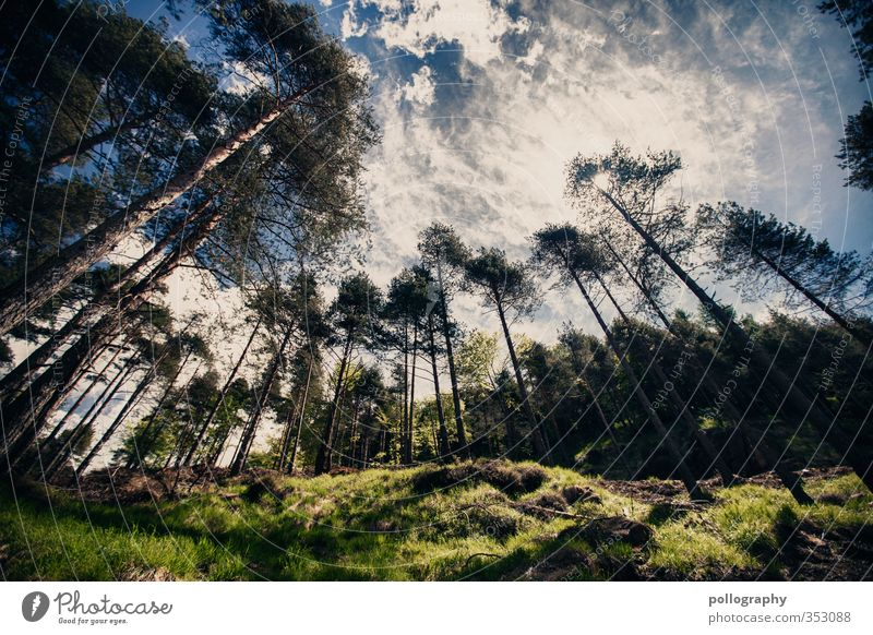irgendwann werd ich auch mal groß Himmel Natur Ferien & Urlaub & Reisen Sommer Pflanze Sonne Baum Erholung Landschaft ruhig Wolken Umwelt Wiese Gefühle Gras