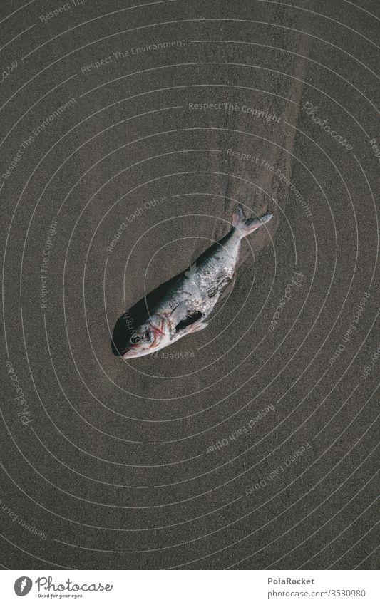 #AS# DUDE! Fisch Strandleben Tod artensterben sterblich Sterblichkeit sterbliche überbleibsel sterbliche hülle Außenaufnahme Farbfoto Tier Vergänglichkeit