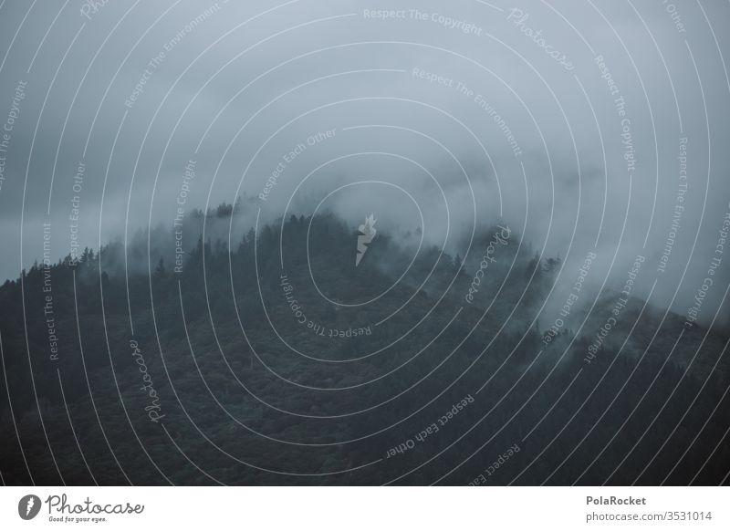 #As# Nebellande Nebelschleier Nebelstimmung Nebelbank Nebelmeer Nebelwand Nebelwald Nebelfeld Außenaufnahme Menschenleer Natur Farbfoto Tag Neuseeland