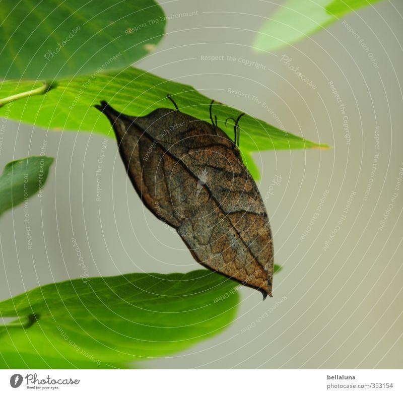 Ein Blatt im Wind? Natur grün Pflanze Sommer Tier Umwelt Garten braun Park sitzen Wildtier warten Flügel Insekt verstecken