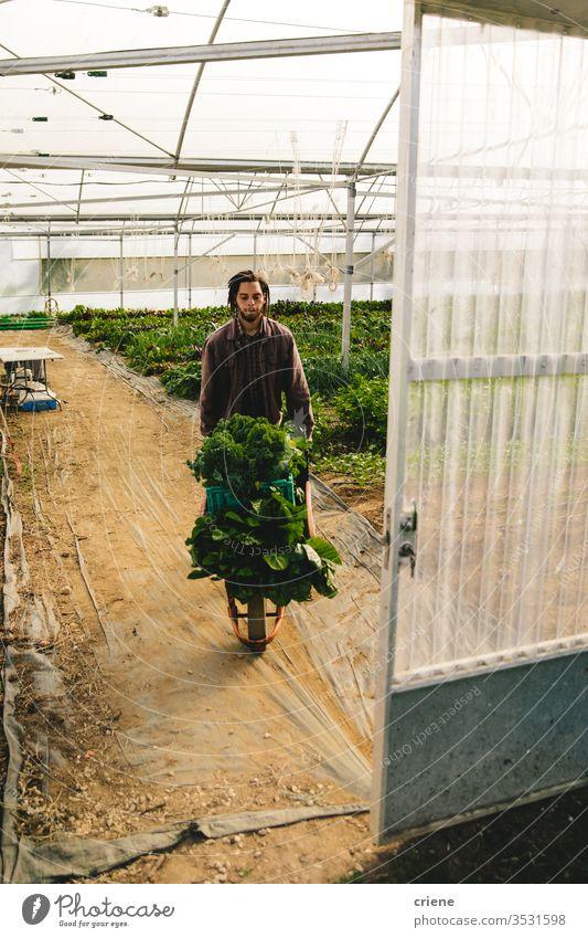 Männlicher Landarbeiter mit Gemüse in der Schubkarre Gewächshaus Landwirtschaft Kasten Kiste nachhaltig produzieren frisch Garten Natur grün Ernte organisch