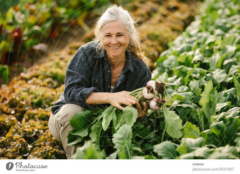 Lächelnde ältere Frau, die im Gewächshaus Gemüse auf dem Feld pflückt Senior Glück Rübe nachhaltig produzieren frisch Garten Landwirt Natur grün Ernte organisch