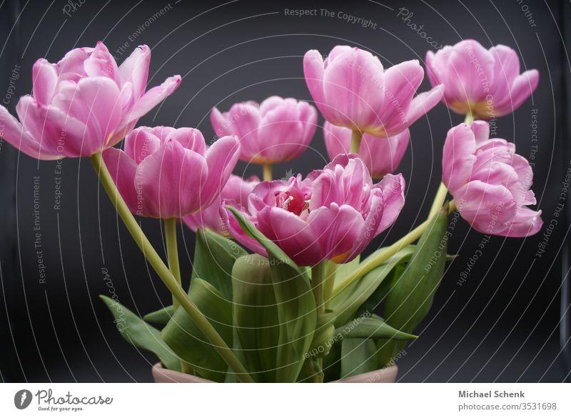 Ein Strauß blühender Pfingstrosen blumen Pfingstrosen. Romantik Blütenblatt Sommer grün Dekoration & Verzierung Blumenstrauß Natur Frühling schön romantisch