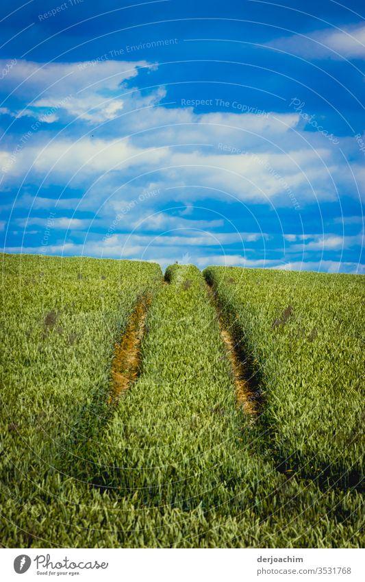 """"""" Dem Horizont entgegen """". Blauer mit Wolken bedeckter Himmel , ein grünes Feld. Im Vordergrund Spuren von einem Traktor im Weizenfeld. Getreide blau Korn"""