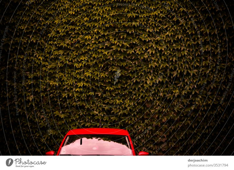 Ein  Rotes Auto , nur Scheibe  und Dach ist zu sehen  ,steht vor brauner Blätterwand. auto Farbfoto rot Außenaufnahme Menschenleer Licht PKW Tag ruhig blätter