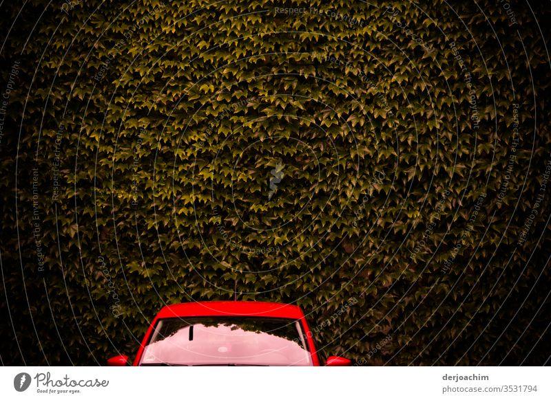 Rotes Auto  steht vor brauner Blätterwand auto Farbfoto rot Außenaufnahme Menschenleer Licht PKW Tag ruhig blätter Textfreiraum oben Wetter Fahrzeug