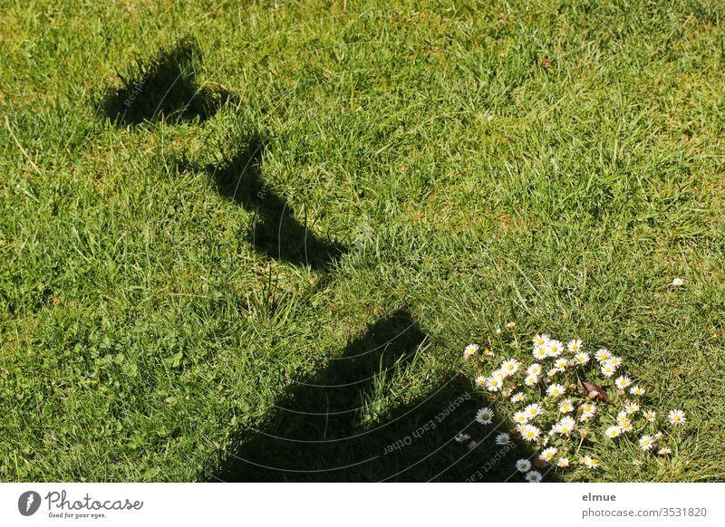 Schatten von verschiedenen Kleidungsstücken an einer Wäscheleine auf einer Wiese mit Gänseblümchen Waschtag trocknen Frühlingsgefühle BH Slip Pullover Sonne