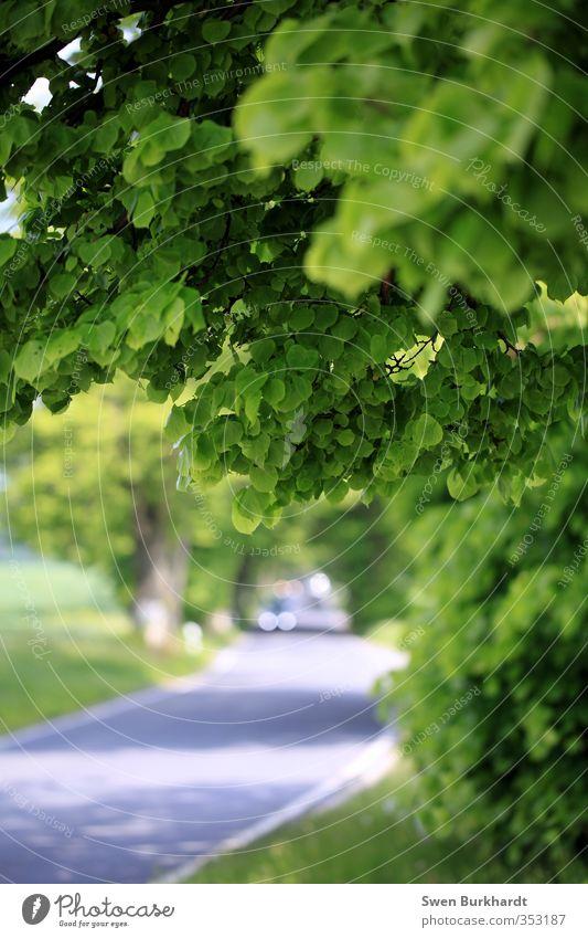 Mein wunderschönes Rügen Ausflug Ferne Sommer Umwelt Natur Pflanze Schönes Wetter Baum Grünpflanze Linde Wald Verkehrswege Straße Wege & Pfade Fahrzeug