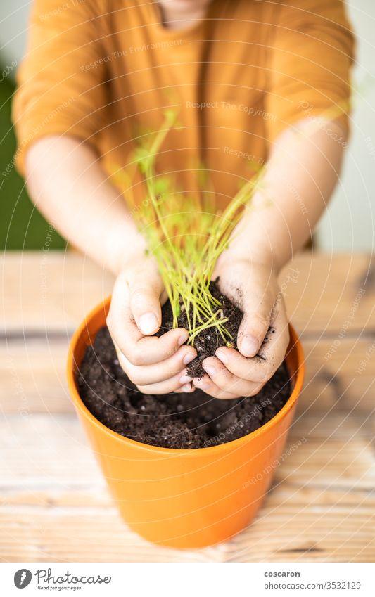 Kleines Kind, das eine Linsenpflanze auf einem Topf pflanzt landwirtschaftlich Ackerbau Pflege Kaukasier Kindheit Einsperrung kultivieren kultiviert