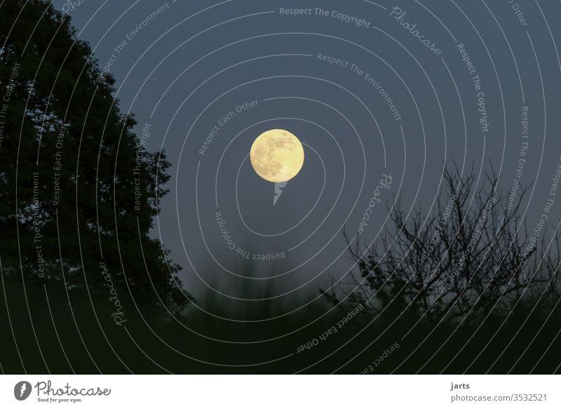 Vollmond Nacht Himmel Mond dunkel Langzeitbelichtung Baum Natur Mondschein Farbfoto Lichterscheinung Schatten Silhouette Außenaufnahme Menschenleer blau