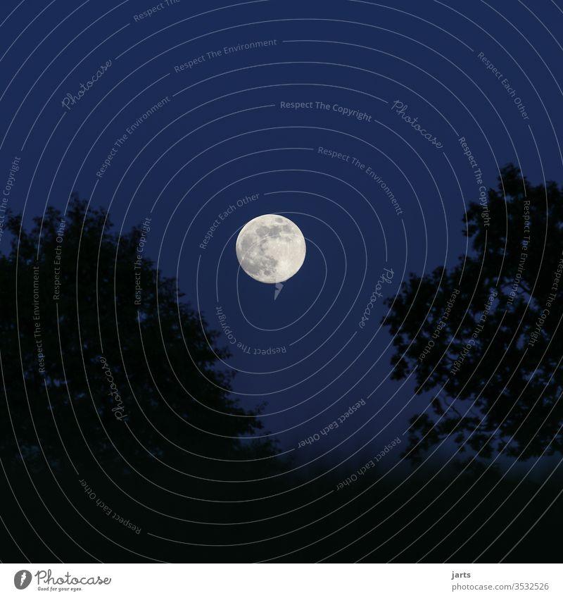 Gute Nacht Vollmond Stimmung Wolkenloser Himmel Horizont ruhig Licht Umwelt Naturschutzgebiet Textfreiraum oben Nachthimmel Landschaft Außenaufnahme