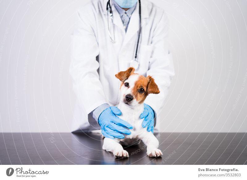 veterinärmediziner, der in der Klinik mit dem süßen kleinen Jack-Russell-Hund arbeitet. Trägt Schutzhandschuhe und Maske während der Quarantäne. Verwendung des stethoscope.pets healthcare