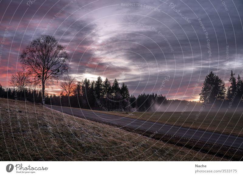 Sonnenuntergang in kalter Nebellandschaft mit Straße bei Triberg im Schwarzwald Januar Landschaft Winter Frost Mystisch Baum Wald Schnee Menschenleer Eis Natur