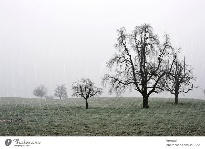 creepy trees Natur alt grün weiß Pflanze Baum Landschaft Winter schwarz Wald Umwelt dunkel Schnee Gras grau Luft