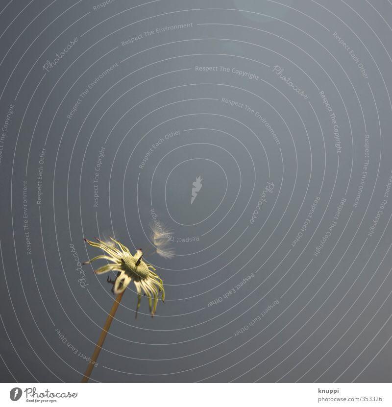 Trio Himmel Natur Pflanze blau Sommer weiß Sonne Umwelt Wärme Blüte Wiese braun Wetter Luft frei Wind