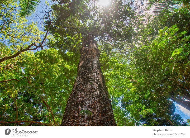 Frischer, grüner Wald aus der unteren Perspektive, während die Sonne scheint. Baum Sommer tiefstehend nach oben Hintergrund Natur Blatt Frühling Ast Kofferraum