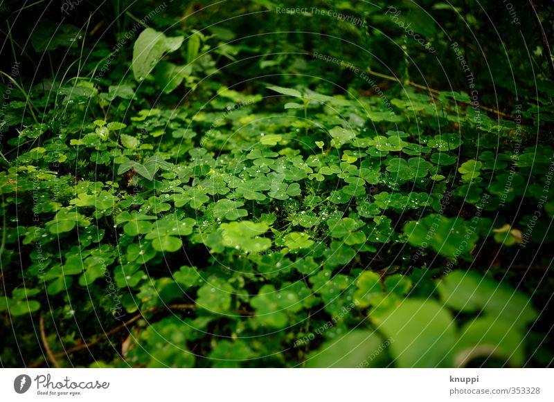 Glück Umwelt Natur Pflanze Urelemente Wasser Wassertropfen Sonne Sonnenaufgang Sonnenuntergang Sonnenlicht Frühling Sommer Schönes Wetter Regen Wärme Gras Farn