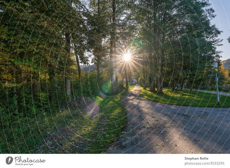 Sonnenstrahlen kommen durch einen herbstlich gefärbten Baum. Sonnenschein Sonnenstern Linsenflar Herbst fallen Natur Farben Berge u. Gebirge reisen