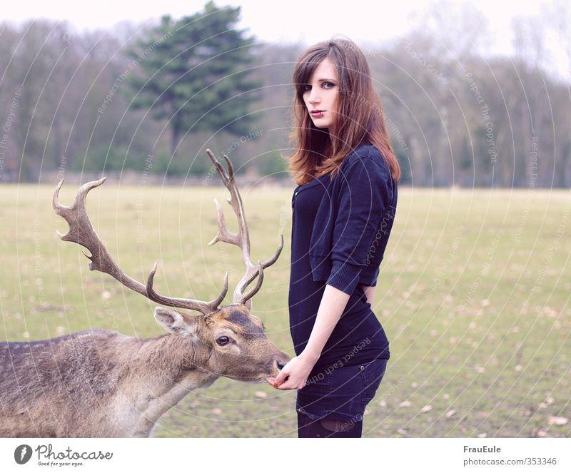 mr hirsch feminin Junge Frau Jugendliche 1 Mensch 18-30 Jahre Erwachsene Natur Landschaft Park Feld Wald Tier Wildtier füttern Farbfoto Außenaufnahme Oberkörper
