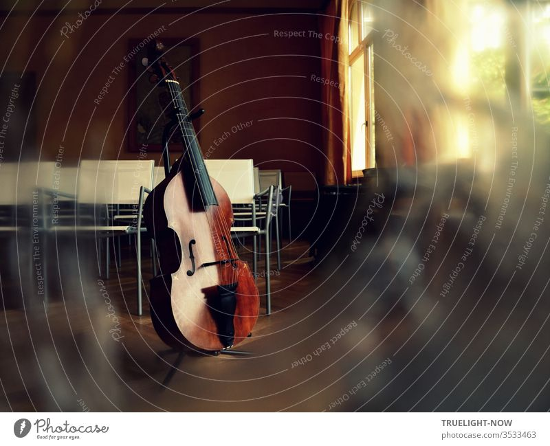 Viola da Gamba, auch Gambe, aus der Meisterwerkstatt von T. Muthesius Streichinstrument Saiteninstrument Resonanzkörper Holz dunkel braun schwarz Lichtreflex