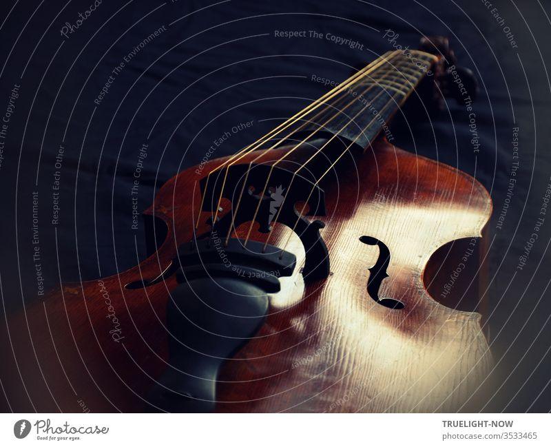 Viola da Gamba, auch Gambe Streichinstrument Saiteninstrument Teilansicht Steg Resonanzkörper Holz low key dunkel braun schwarz Lichtreflex Linien weiß