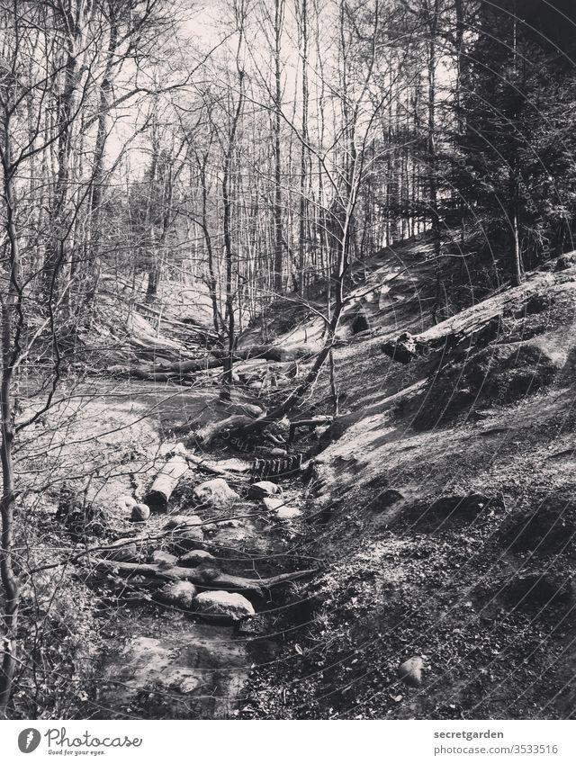 Öko! Wald Waldlichtung Waldboden Waldspaziergang Waldstimmung Waldsterben Natur Außenaufnahme Menschenleer Baum Umwelt Baumstamm Tag Pflanze Waldrand Herbst