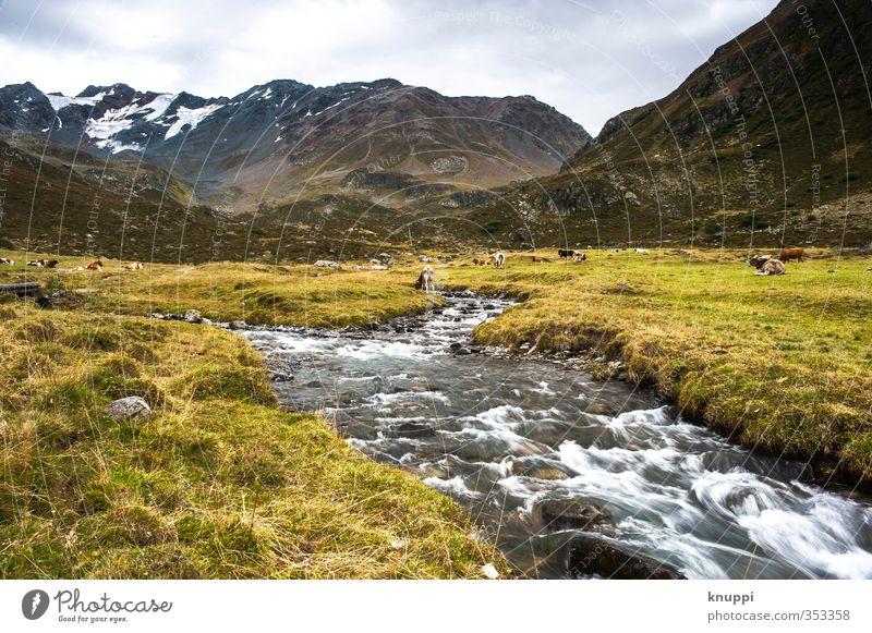 Gletscherlein Himmel Natur grün Wasser weiß Sommer Pflanze Sonne Landschaft Wolken schwarz Umwelt gelb Berge u. Gebirge Schnee Gras