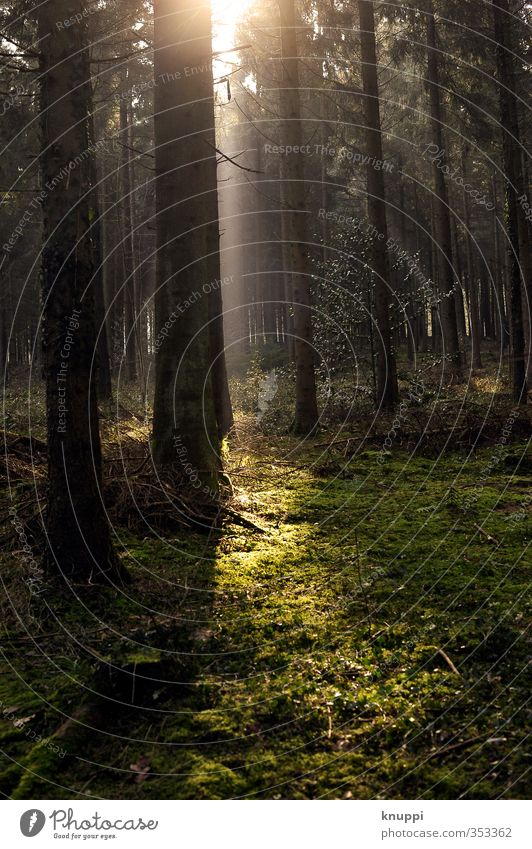 Licht im Dunkel Natur grün schön Sommer Pflanze Sonne Baum Erholung Landschaft ruhig schwarz Wald Umwelt Frühling Luft braun
