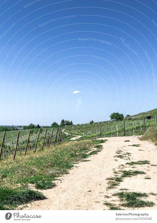 Menschenleerer Weg in den Weinbergen von Schriesheim mit einer Wolke am Himmel Wege & Pfade Wolkenhimmel Wolkenloser Himmel Weinrebe Spaziergang Sommer