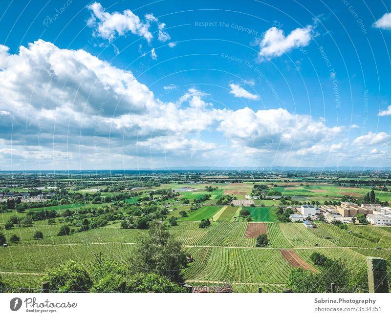 Ausblick in die Rheinebene bei schönen Wetter und wenig Wolken Schriesheim Außenaufnahme Farbfoto Landschaft Menschenleer Ferien & Urlaub & Reisen Himmel