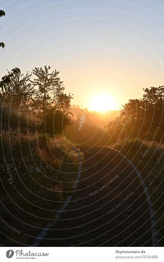 Der Sonne entgegen sonne sonnenaufgang weg in die sonne licht am ende des weges sonnenschein morgens abends spaziergang rausgehen draußensein lustaufnatur leben