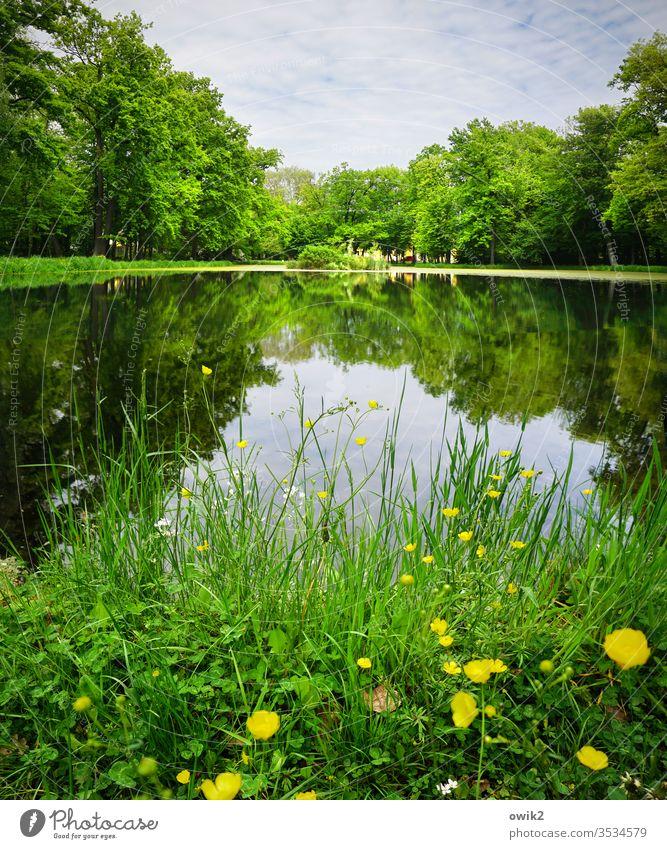 Schlosspark Park Idylle Butterblumen Gras Wasser See Teich Seeufer Wasseroberfläche Spiegelbild Reflexion & Spiegelung Wasserspiegelung Himmel Wolken Insel