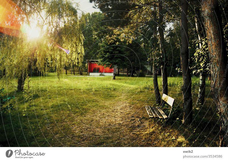 Kleine Bühne Park Wald Bank Parkbank Sonnenlicht Bäume strahlend leuchtend Lichterscheinung Blendenfleck geheimnisvoll Außenaufnahme Farbfoto Gegenlicht Tag
