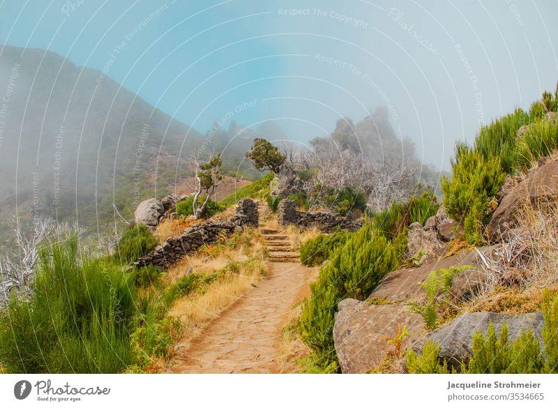 Wandern in Richtung Pico Ruivo auf Madeira Portugal Europa Berge u. Gebirge wandern Wanderweg Bergweg Trekking Sonne Blauer Himmel Nebel neblig Wolken Pflanzen