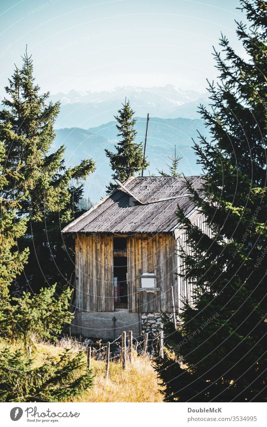 Eine von Tannen eingerahmte, verlassene Hütte mit den Bayerischen Alpen im Hintergrund Gebirge Berge u. Gebirge Himmel blau Landschaft Natur Außenaufnahme