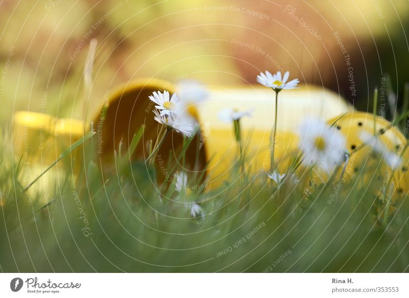im Gras liegen Erholung ruhig Natur Pflanze Frühling Sommer Schönes Wetter Gänseblümchen Garten Wiese Blühend gelb grün Gefühle Lebensfreude Gießkanne Farbfoto